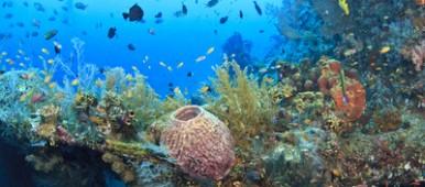 L'Australie et les Maldives protègent leurs fonds marins