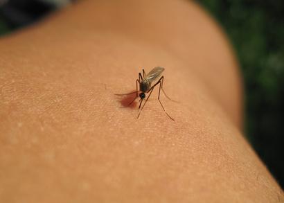 Solutions contre les moustiques