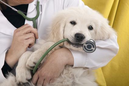 Chat chien vétérinaire et santé