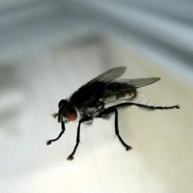 Solutions contre les mouches