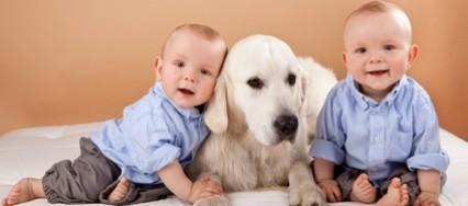 Les bienfaits du chien à la maison